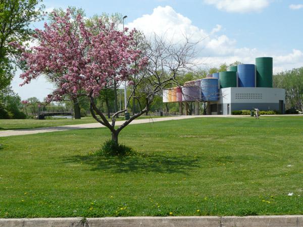 Elka Lane Neighborhood Blossom Tree