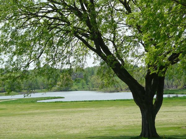 Neighborhood Lake View